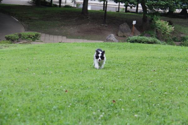 IMG_4141芝生のふるさと公園芝生のふるさと公園