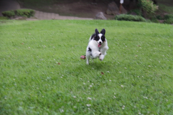 IMG_4142芝生のふるさと公園芝生のふるさと公園