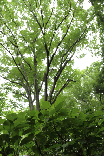 IMG_9963東高根森林公園東高根森林公園