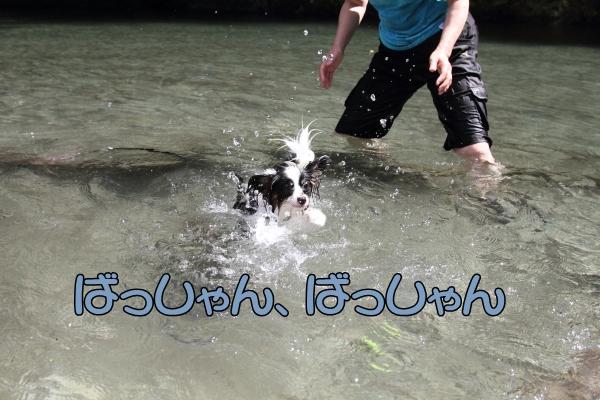 IMG_0756川遊び川遊び