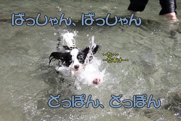 IMG_0758川遊び川遊び