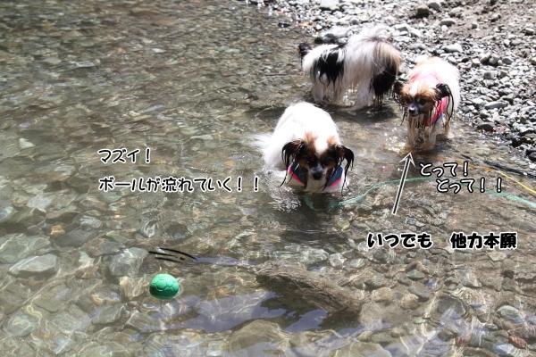IMG_0782川遊び川遊び