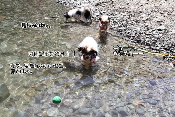 IMG_0783川遊び川遊び