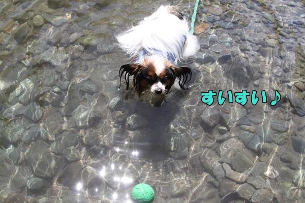 IMG_0785川遊び川遊び