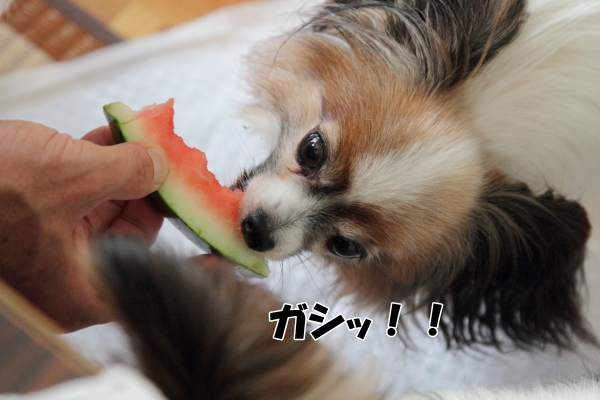 IMG_1188夏休み夏休み