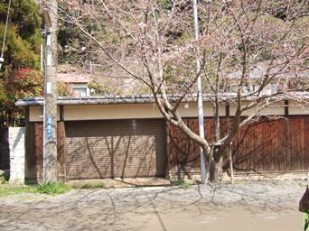 3/28 鎌倉 光則寺参道の桜