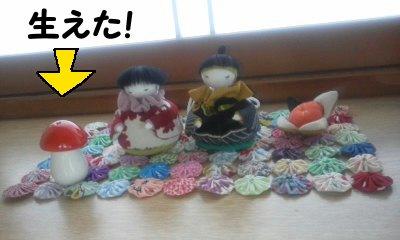 pikako_sama_6.jpg