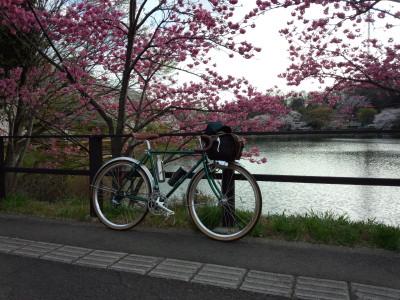 三ッ池公園 桜