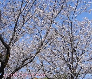お花見2014 2