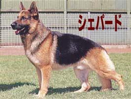 20140421-dog1.jpg
