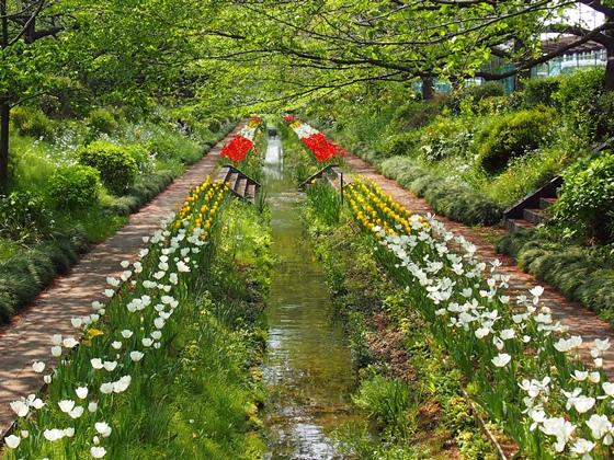 花の遊歩道