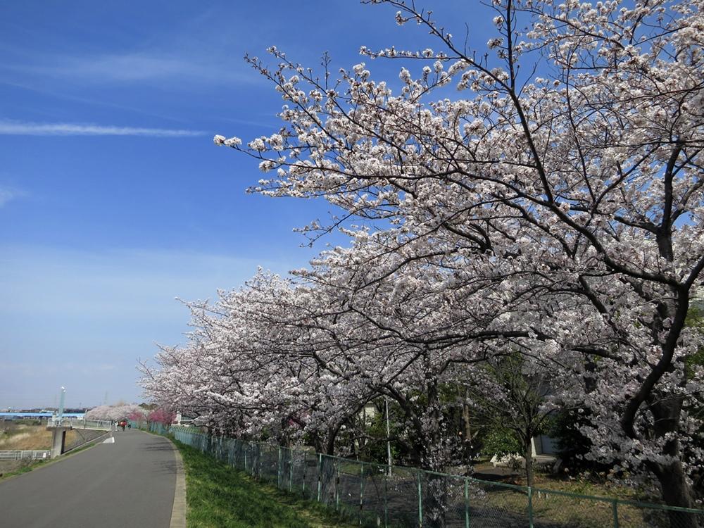 140401桜-1