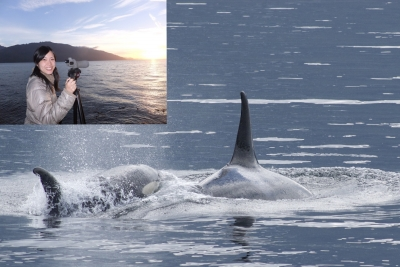 orcas_t.jpg