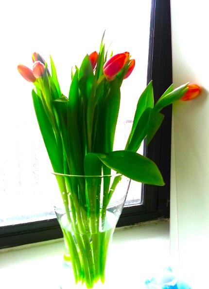 Tulip02.jpg