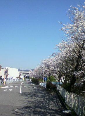 20140404 桜②