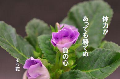 hunokokoro