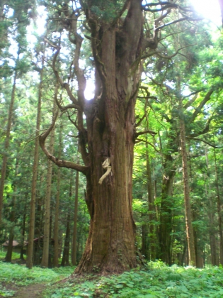 dougahara140628_5.jpg