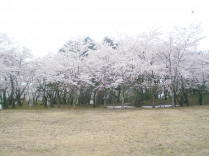 sakurabayasi14_10.jpg
