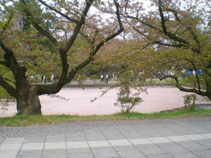 sakurabayasi14_15.jpg