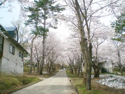 sakurabayasi14_1.jpg