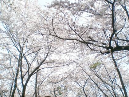sakurabayasi14_4.jpg