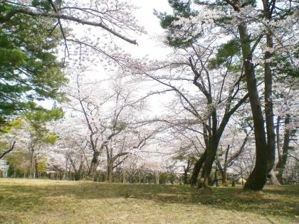 sakurabayasi14_5.jpg