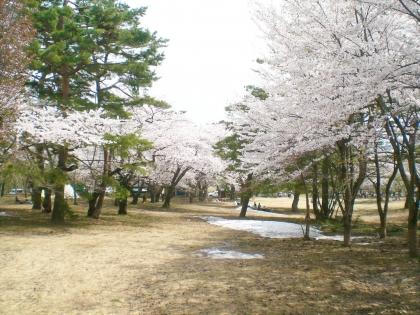sakurabayasi14_6.jpg