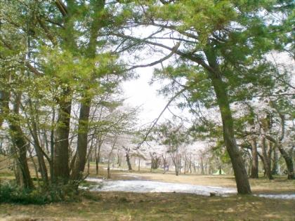 sakurabayasi14_7.jpg