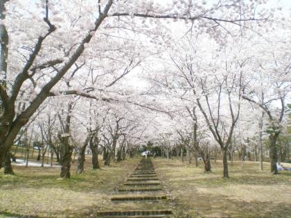 sakurabayasi14_9.jpg