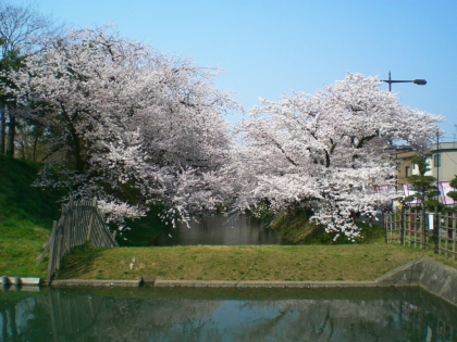sakuramaturi140426_19.jpg