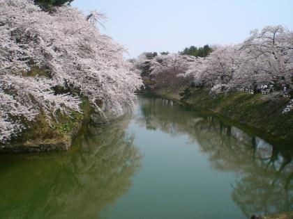 sakuramaturi140426_5.jpg