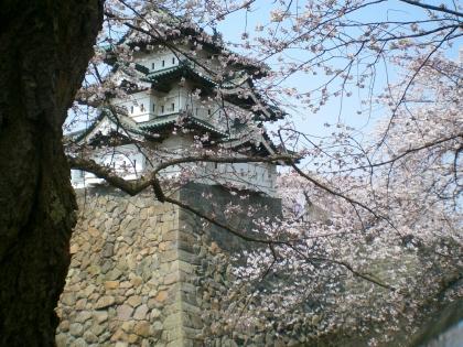 sakuramaturi140426_6.jpg