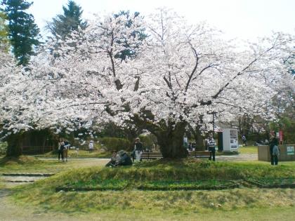 sakuramaturi140426_9.jpg