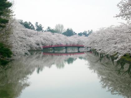 sakuramaturi14_2_12.jpg