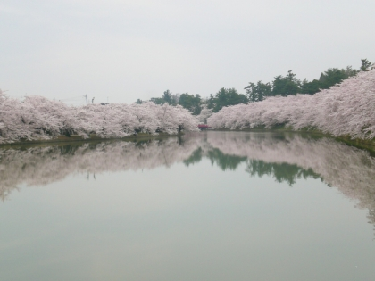 sakuramaturi14_2_13.jpg
