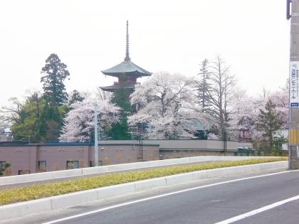 sakuramaturi14_2_21.jpg