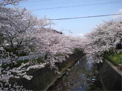 20140405 桜