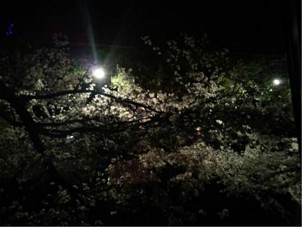 20140408桜