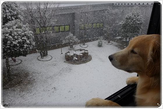 2014,3,6雪10