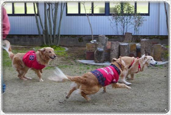2014,3,22お散歩12