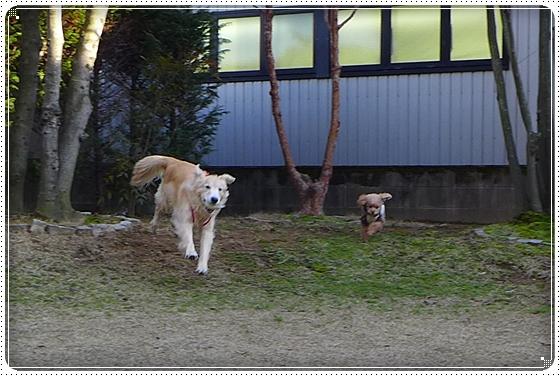2014,3,22お散歩7