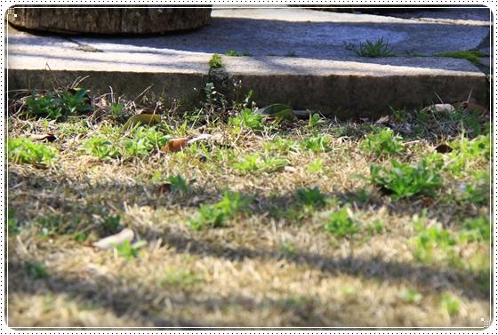 2013,3,23お庭遊び6