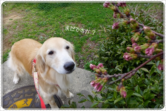 2014,3,31散歩6