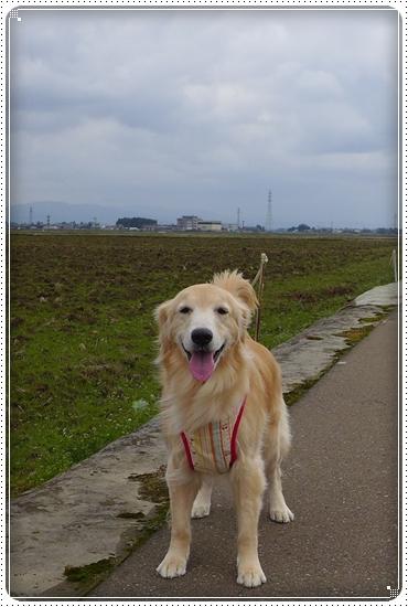 2014,3,31散歩1