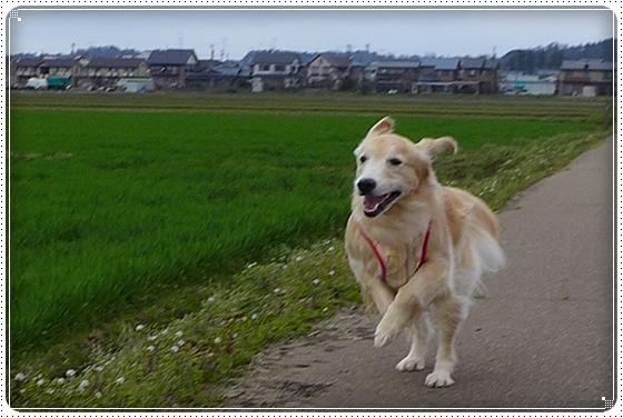 2014,3,31散歩2