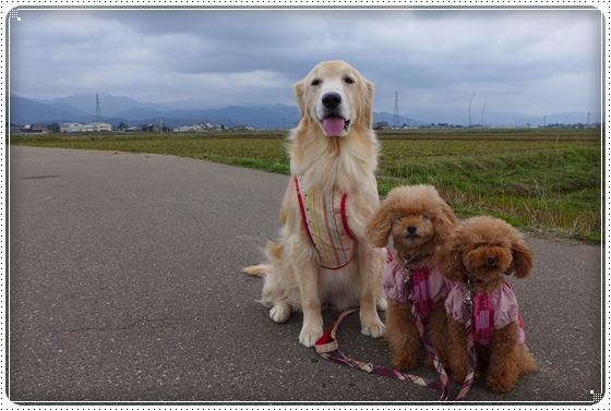 2014,3,31散歩4