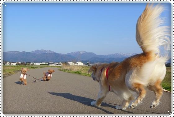 2014,4,1お散歩2