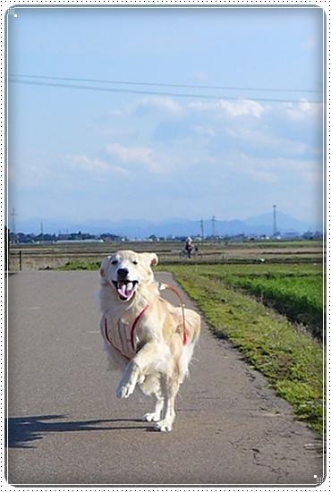 2014,4,5お散歩7