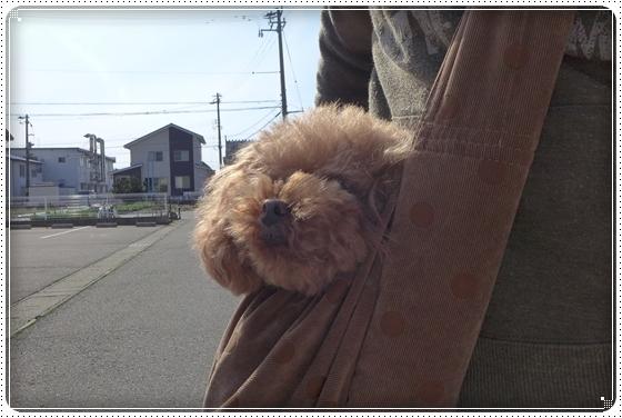 2014,4,7お散歩2