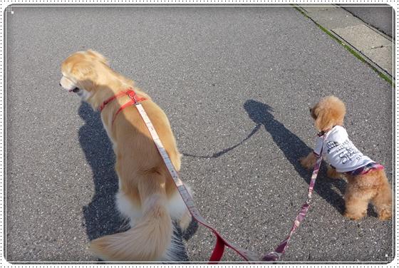 2014,4,7お散歩1